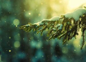 muslim mengucapkan selamat natal