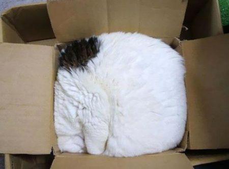 Posisi Tidur Kucing